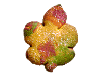 Fall Multicolored Leaf Cookie